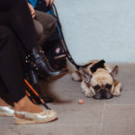 Hund bei Hochzeit