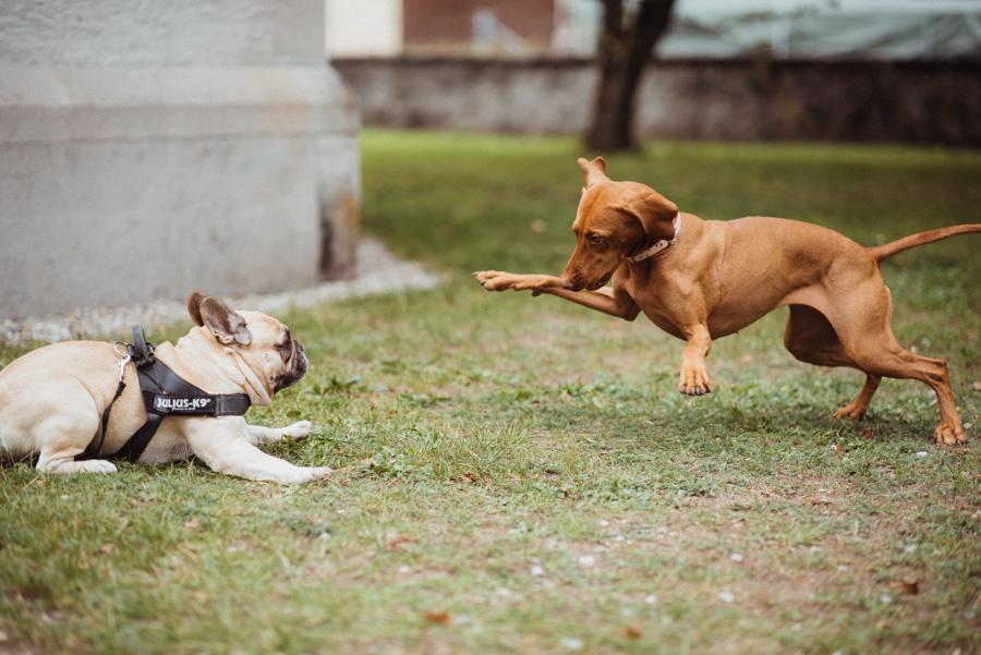 Hund Hochzeit